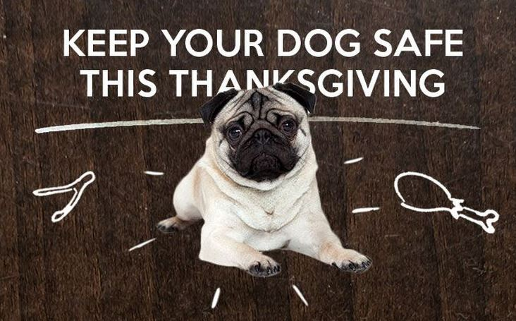 Keep Your Dog Safe this Thanksgiving by Dogster