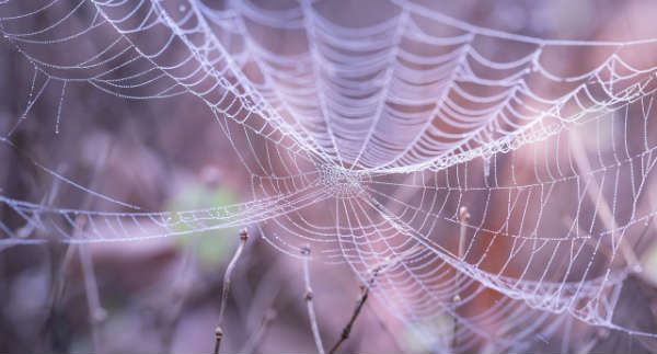 Persistent Sales Calls and Walking Into Spider Webs-2