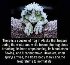 Frozen Frog Meme