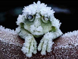 The Facebook Frozen Frog and Fodder for Content Marketing