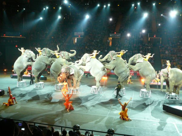 9 PR Anecdotes from My Stint with the Ringling Bros